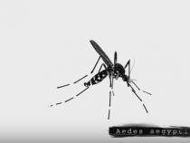 CDC Issues Zika Virus Warning This Mosquito Season