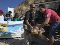 Sea Turtles Freed Back To Nature