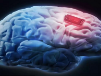 Elon Musk's New Company Will Merge Human Brains With AI By 2021
