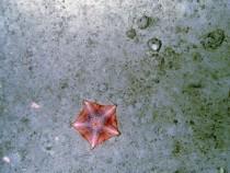 Starfish on the Ocean Floor (IMAGE)