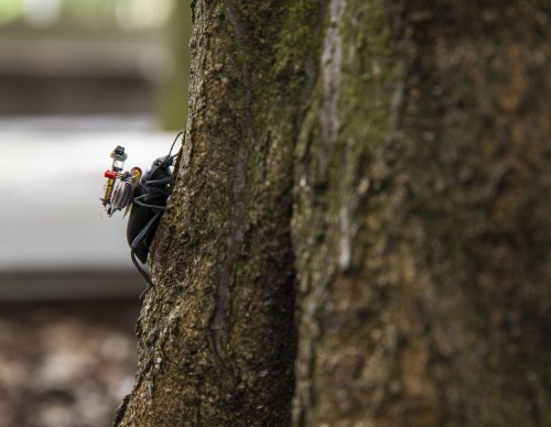 Beetle with the wireless camera system on a tree