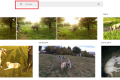 Google Photos puts images of large dogs into 'horses' collection
