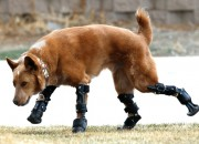 Tara Anderson and her team from 3D Systems made upgrades for an underdeveloped dog's artificial prosthesis.