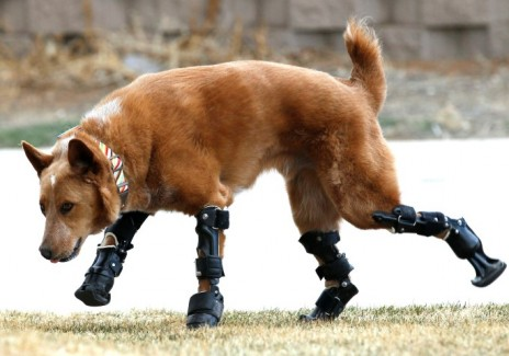 Underdeveloped Dog Gets A Cybernetic Upgrade