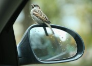 Blacksburg, Virginia: Virginia tech researchers suggest that city birds are more likely to be aggressive than the rural birds.
