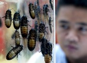 North Carolina State University researchers along with researchers from the Russian Academy of Sciences conducted research on two dozen American cockroaches to understand the antennae-cleaning behavior of insects.