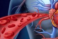 Link Found Between Heart And Blood Cells' Early Development