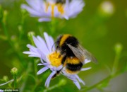 Caffeine has been found to increase honeybee memory functions, increasing their ability to remember flowers