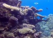 A recent article saying that the entire Great Barrier Reef has died off got some scientists scowling. While the Great Barrier Reef definitely is under severe stress and part of it is dying, there are sections that can still be saved.