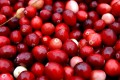 Cranberry Juice Helps Treat UTI: Fact Or Fiction?