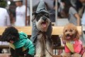 Halloween 2016: Experts' Tips On How To Ensure The Safety Of Your Pets