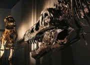 The brain tissue is said to be the first ever fossilized example of a brain from a dinosaur.