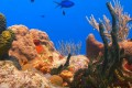 Coral Reef Ecosystem Threatened By Rising Carbon Dioxide