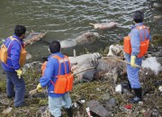 H7N9, the new strain of bird flu virus, did not come from humans; the pig carcasses pulled from the Huangpu River may be connected to the outbreak.