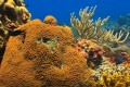 Corals In Caribbean Are Proving Resistant To Climate Change