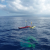 Silicon Valley startup Liquid Robotics announces the Wave Glider SV3, a mobile self-sufficient data gathering and processing center designed to float through the ocean for months.