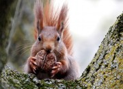 A stressed out squirrel gives birth to furry little babies that grow faster than normal pace, giving them an edge, according to a new study by Michigan State University.