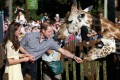 The Silent Extinction Of Giraffes, Will The Earth Soon Lost Its Tallest Land Animal?