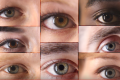 What's Your Eye Color? All Eyes Are Actually Brown, New Research Says