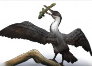 The Arctic region was much different then. A diverse ecosystem lived there in the past. A new type of prehistoric bird that has been discovered shows this biodiversity back then.