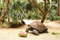A Tortoise Acting Like A Puppy? Find Out As It Wins The Heart Of Everyone From The Florida Wildlife Center