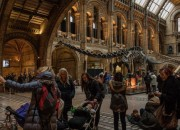 Dinosaurs have been popular attractions in museums. Dippy the dinosaur leaves the London museum to begin its two-year tour.