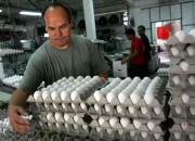 South Korea egg shortage will be addressed and alleviated by New Zealand.