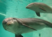 A couple from North Carolina plans to give birth underwater with dolphins as their OB-GYN. Dolphin-assisted birth? A couple from North Carolina traveled all the way to Hawaii to experience it at the Sirius Institute