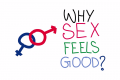 Daily sex is good or bad?? Benefits of sex