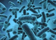 Bacteria can cause a number of illnesses. A bacterial enzyme can stop the body from fighting diseases.
