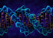 The human genes contain the basic component instructions that make up a human. The human genes regulating code has been unlocked by scientists.