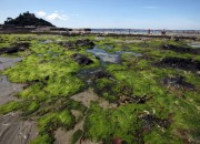 New studies have confirmed the bacteria-killing effects of seagrasses. Harmful bacteria in sea water have been shown to decrease in the presence of the underwater plants, but pollution and high levels of temperature are threatening their existence.