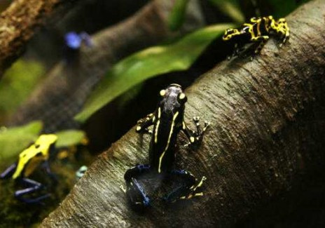 Media Preview Is Held For New Frog Exhibit