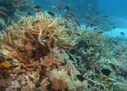What Is Coral Bleaching? Considering the adverse effects brought by climate change and human activities, is it to be held accountable for these phenomenon? What's the truth behind claims that the worst-ever coral bleaching has happened on the Great Barrier Reef? Find out what experts have to say