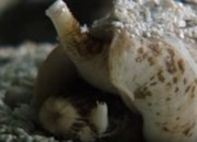Considering the adverse effects that opioid use can bring, what's the truth behind claims that a sea snail's venom works better than opioid painkillers? Could this be the alternative solution to stop the use and abuse of the dangerous drug? Find out what experts have to say