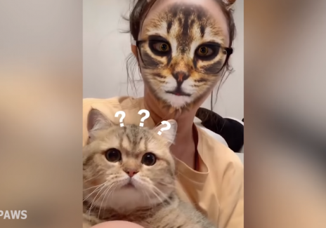 [VIDEO] Pet Owners Try Cat Filter on Their Pets: Some of Them are Not Happy