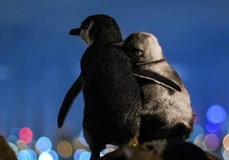 Penguin supports fellow widow through hardship
